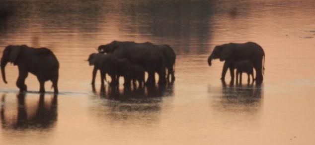 Elephants at sunset. All photos copyright © Tom Bennigson/Open Heart Safari.